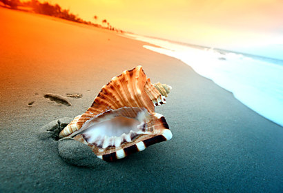 Fototapeta Shell on the beach 3223
