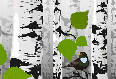 Fototapeta Bird of birches ft-72912861