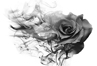 Fototapeta Smoke rose black ft-209893237