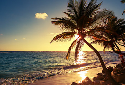 Fototapeta Palm tree on the tropical beach 24841